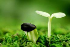 7 chiến lược thịnh vượng và hạnh phúc