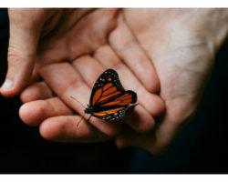 Hiệu ứng cánh bướm: Đổi đời từ những hành động không liên quan tưởng chừng là nhỏ nhất.